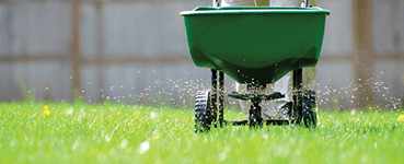 Lawn Aeration & Over Seeding